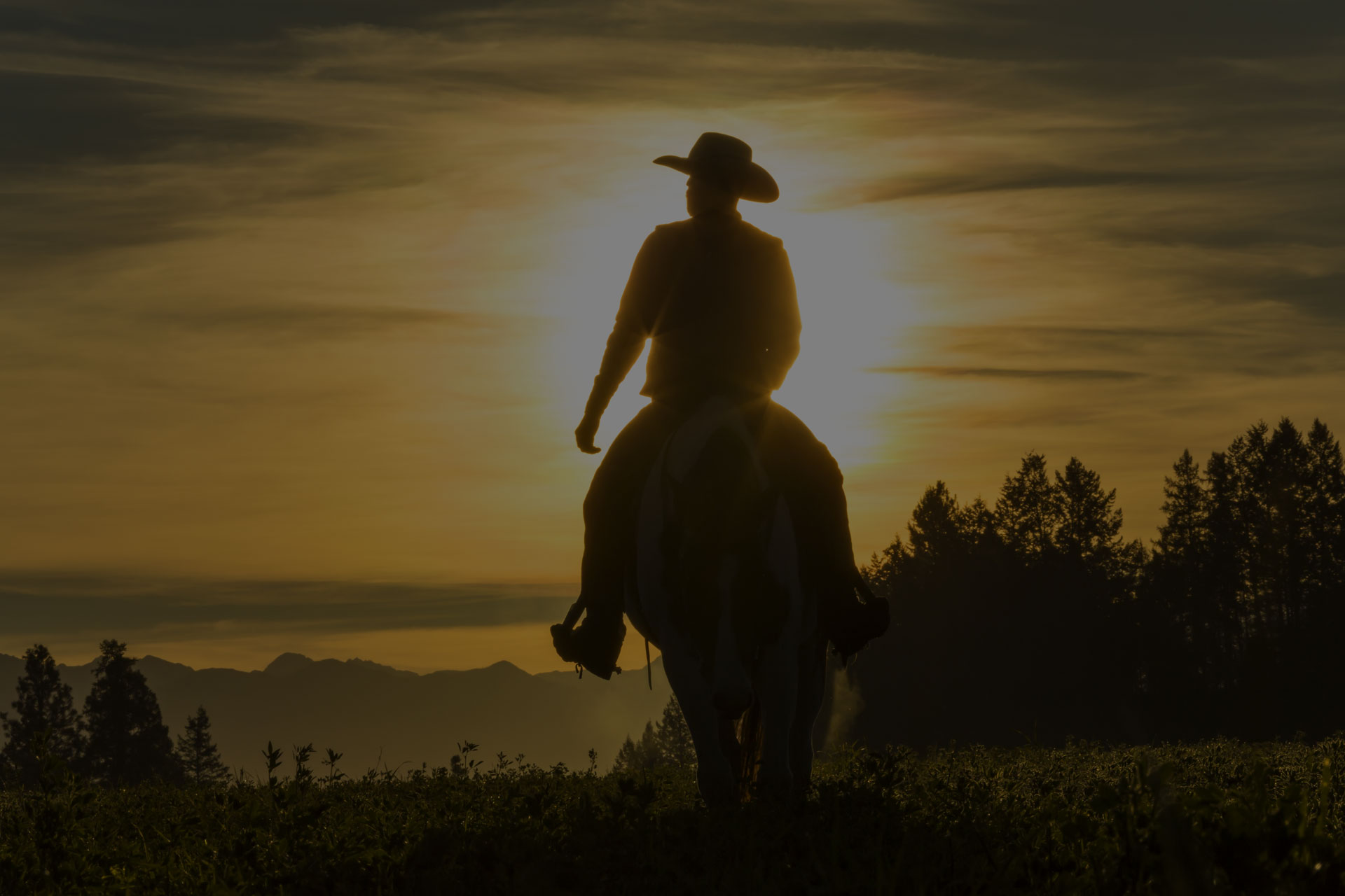 Cowboy riding across grassland with mountains behind, early morning, British Colombia,